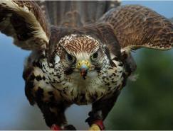 28张漂亮的大自然和野生动物