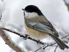 白色梦幻:冬季雪景摄影欣赏