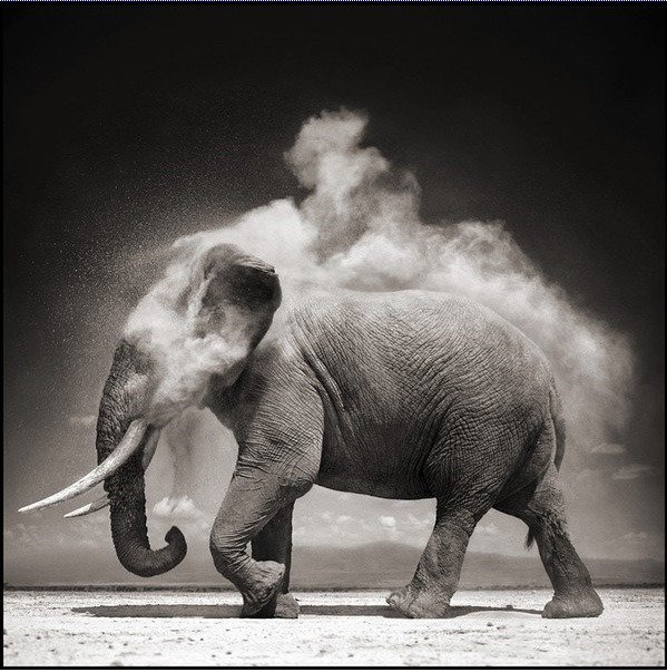 nick brandt黑白动物摄影