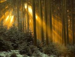 漂亮的森林風景攝影