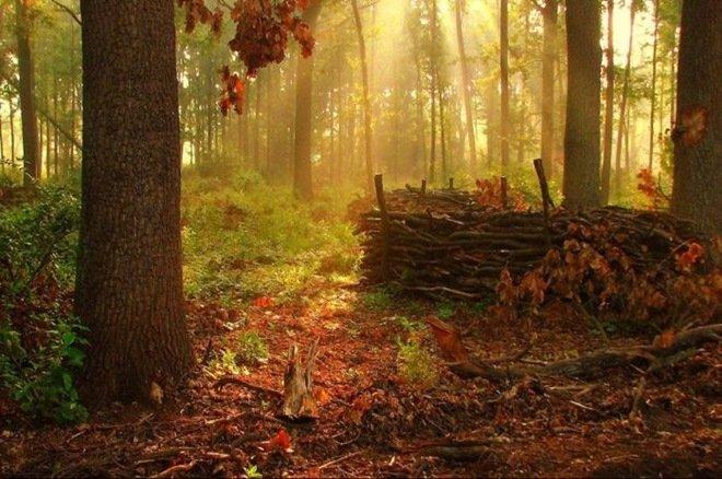 漂亮的森林风景摄影