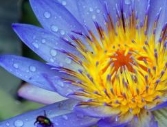 50张漂亮的花摄影作品