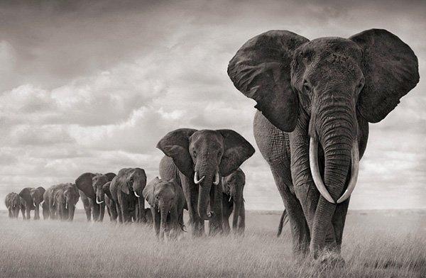 25张漂亮的黑白动物摄影欣赏图片