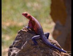 Frtosi野生动物摄影作品