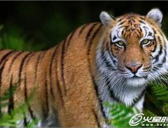 3dsMax打造勇猛的老虎