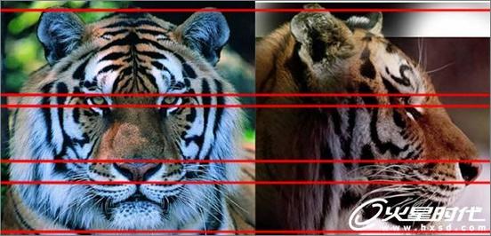 尽显王者风范!3ds Max打造最勇猛的老虎