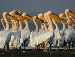 34张动物摄影澳门金沙网址欣赏