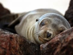 13张超漂亮的野生动物摄影