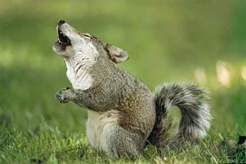 35张有趣的动物合成照片欣赏