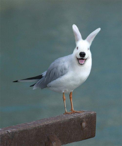 35张有趣的动物合成照片欣赏(3)