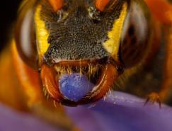 36张漂亮的昆虫微距摄影