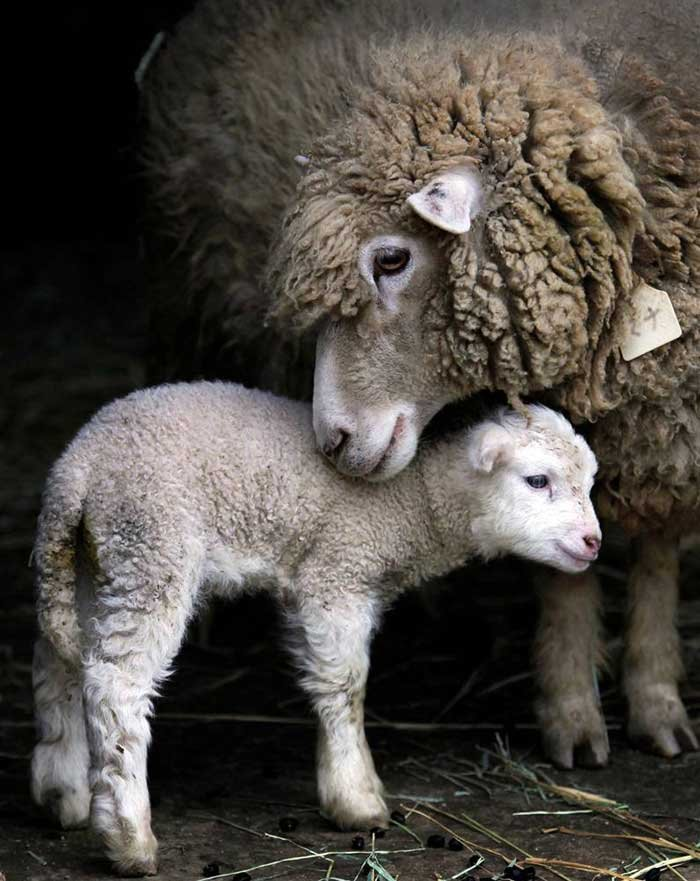 动物世界的母子温情