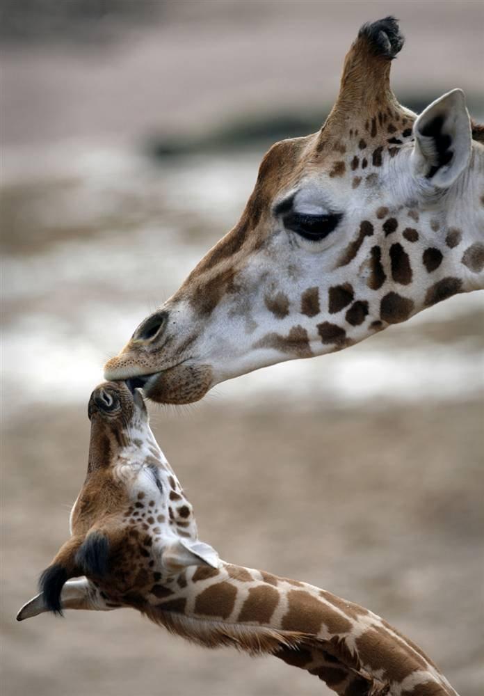 资讯_动物世界的母子温情 - 设计之家