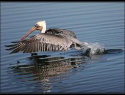 LinhDinh鸟类摄影欣赏