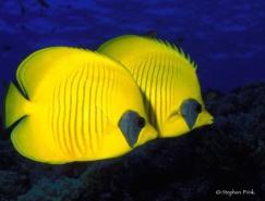 StephenFrink海底生物摄影作品