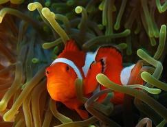 50张漂亮的水底摄影作品