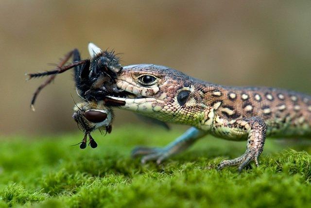 40张动物捕食特写照片欣赏(2)