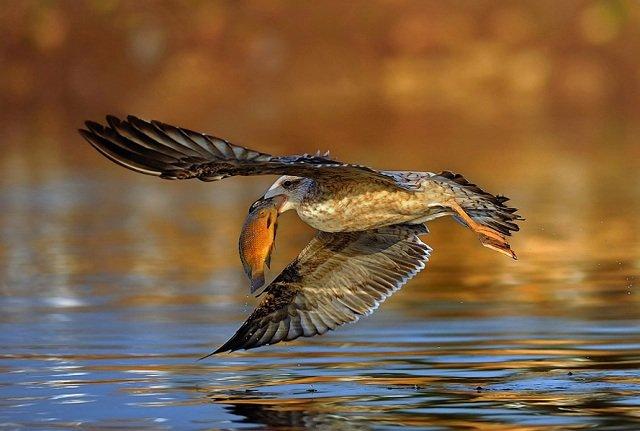 40张动物捕食特写照片欣赏