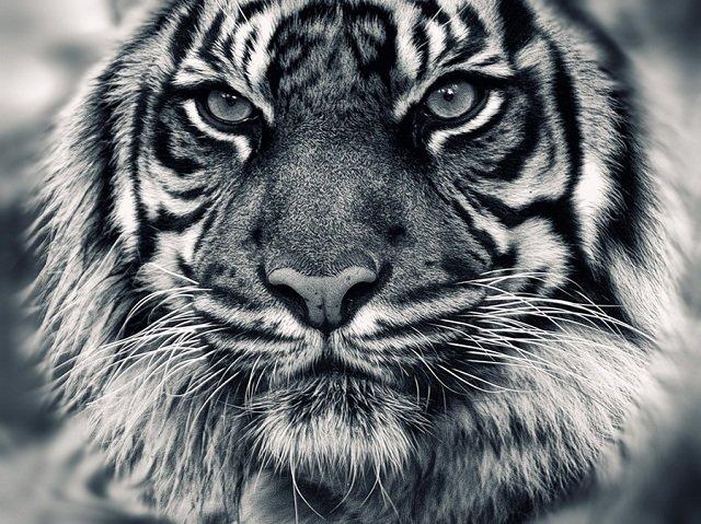 40张动物捕食特写照片欣赏(3)