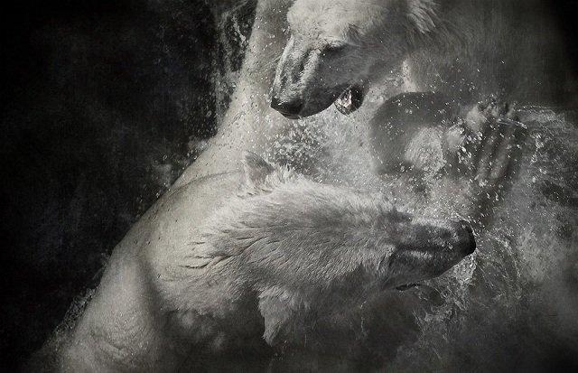 40张动物捕食特写照片欣赏(4)