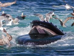 2010年海洋最佳摄影作品