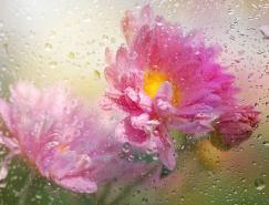 美丽的花:MakushinaTatyana摄影作品