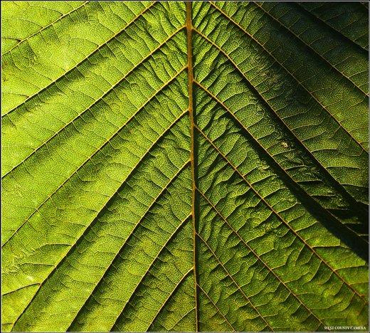 35张杰出的大自然图案(Pattern)摄影