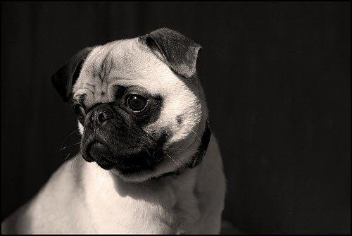 120张漂亮的黑白摄影作品欣赏(7)