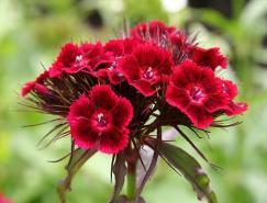 26张漂亮的花摄影欣赏