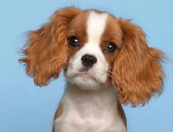 超级可爱的小狗:宠物摄影师PiotrOrgana作品欣