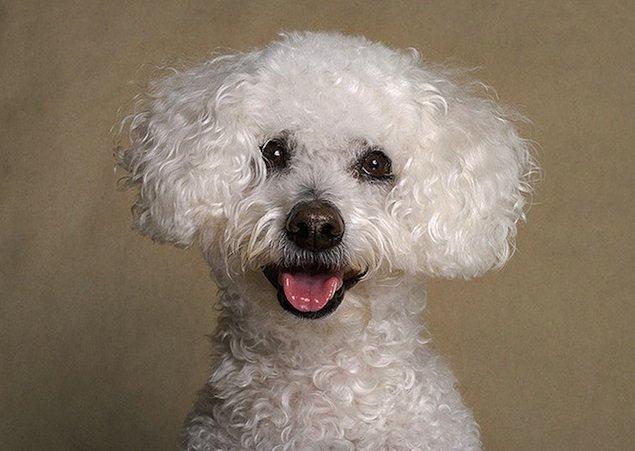 超级可爱的小狗:宠物摄影师piotr organa作品欣赏(2)