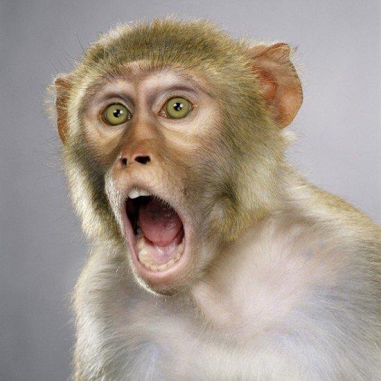 20张可爱的猴子肖像摄影作品