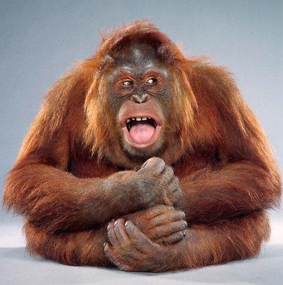 20张可爱的猴子肖像摄影作品(2)