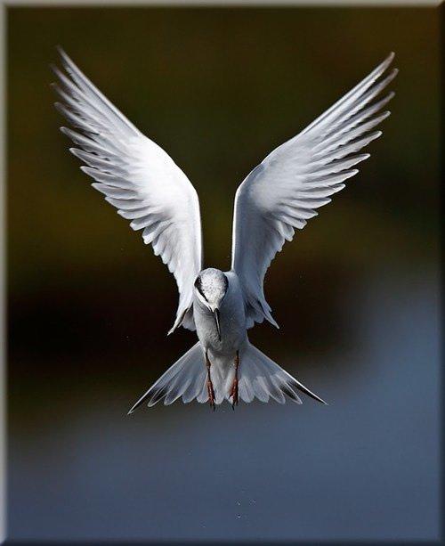 壁纸 动物 鸟 鸟类 500_613