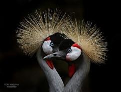 40张出色的动物摄影欣赏