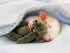 英国19岁摄影师JessicaFlorence镜头下可爱的老鼠