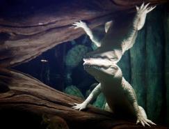 国家地理频道精彩动物摄影澳门金沙网址(2010年7月)