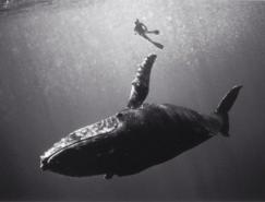 WayneLevin黑白水下攝影