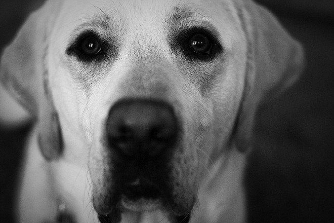 36张黑白肖像摄影作品(3)
