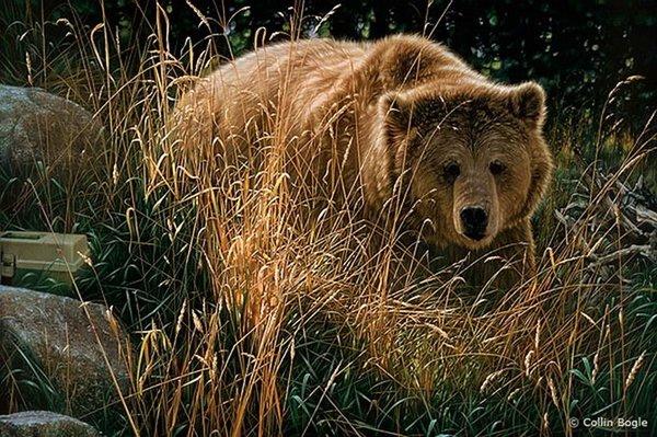 bogle超逼真的野生动物绘画作品欣赏(2)