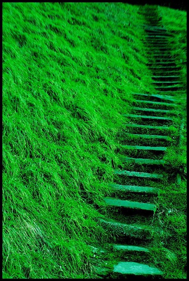 美的标志矢量图_美图欣赏:大自然中漂亮的绿色 - 设计之家