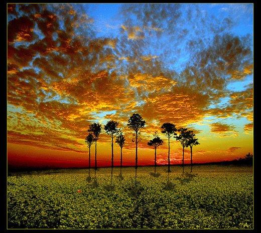 50张漂亮的树摄影欣赏