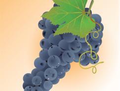 illustrator绘制逼真可口的葡萄