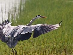 动物摄影:鸟类摄影教程