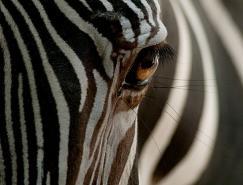 50张动物摄影佳作欣赏
