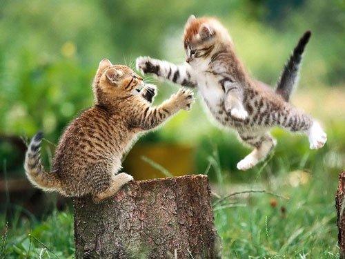 动物凶猛:动物之间格斗特写照片欣赏(3)