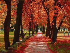 拍攝秋季紅葉的五個技巧