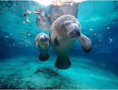 30张优秀的水下摄☆影佳作欣赏