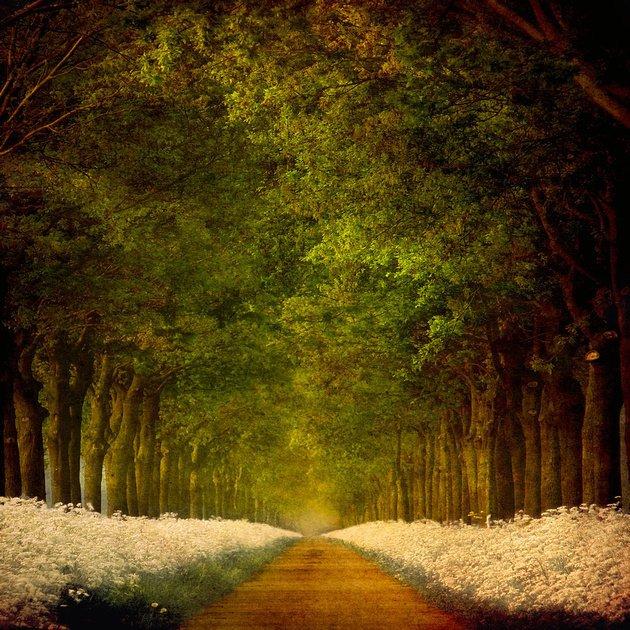 荷兰摄影师larsvandegoor美丽迷人的风景摄影作品(2)