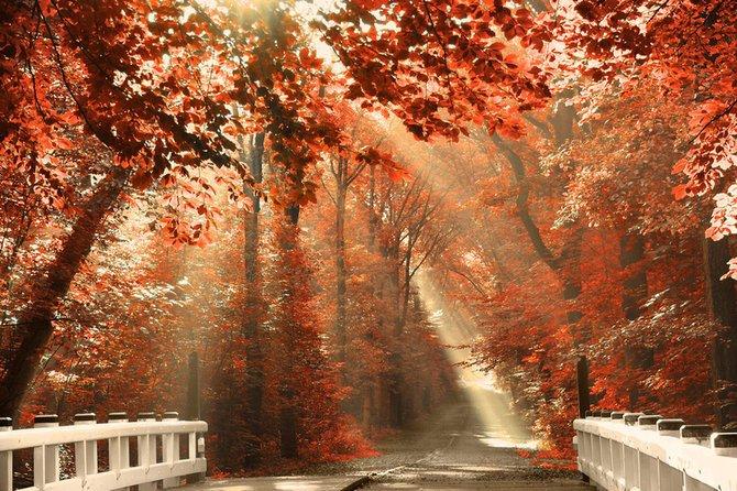 荷兰摄影师larsvandegoor美丽迷人的风景摄影作品(4)